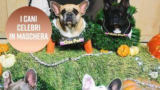I cani dei vip: ecco quali sono stati i migliori di Halloween