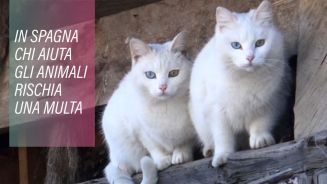 Se aiuti un animale in Spagna rischi una multa